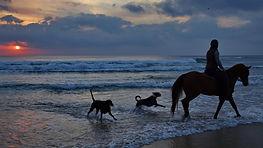Horse riding with dogs on beach - Sea Horse Diamond Beach