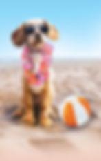 Beach-Dog1[1].jpg