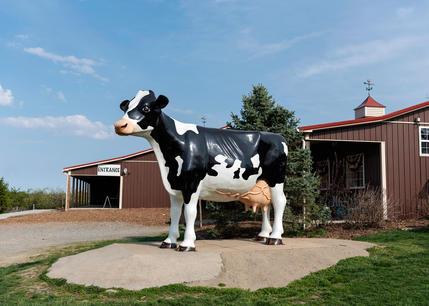 GCF Cow.jpg