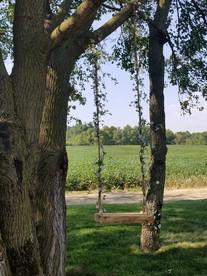 Swing in Tree Area in Back Yard