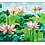 Thumbnail: תחתיות לצלחות