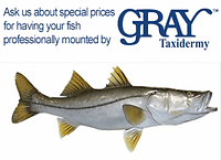 graytaxidermy-special-300x218.png