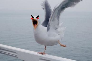 Evil seagull