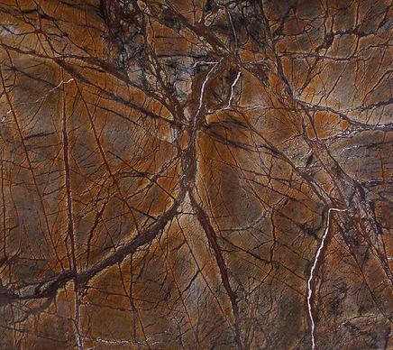 P 58 rain forest brown.jpg