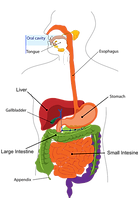 digestion-303364_1280.png