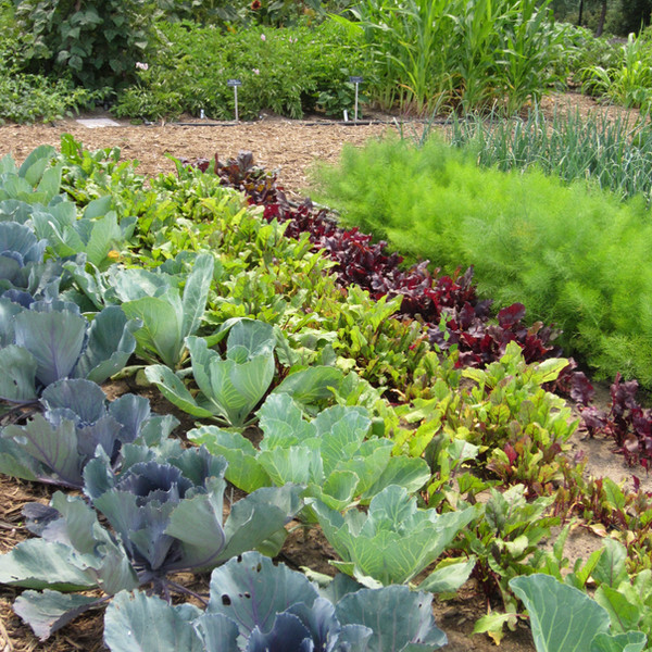 Vegetable Rows_Garden of Eatin_Aug 2013-