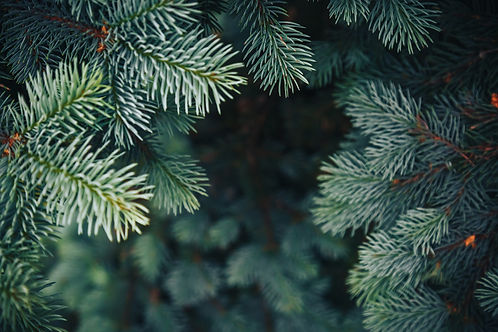 evergreen background.jpg