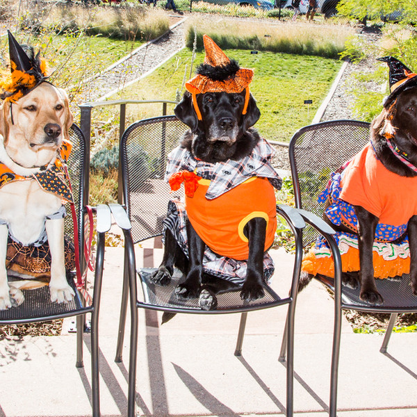 Therapy Dogs_Halloween_2017_Oct 21 2017_
