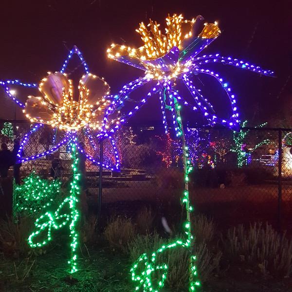 Columbine_Lights_Garden_of_Lights_2018_r
