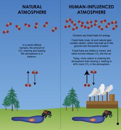 Natural vs Unnatural CO2