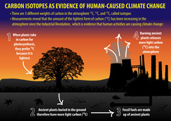 Carbon Isotopes