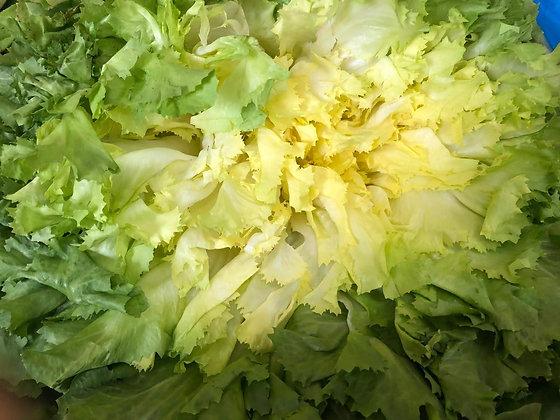Salade Scarole | Provence | 1 pièce
