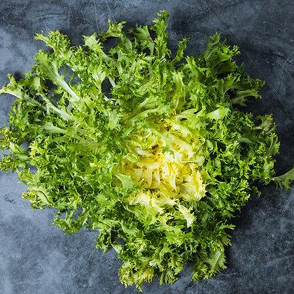 Salade Frisée | Provence | 1 pièce