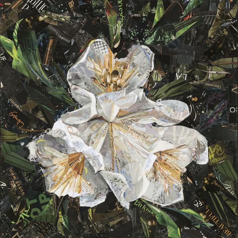 Canyon Snow Iris