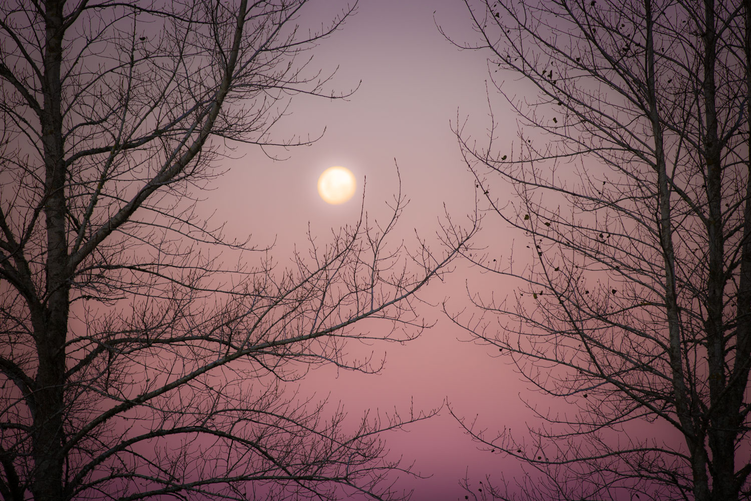 LAST WINTER MOON