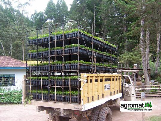 transporte de plantones7.jpg