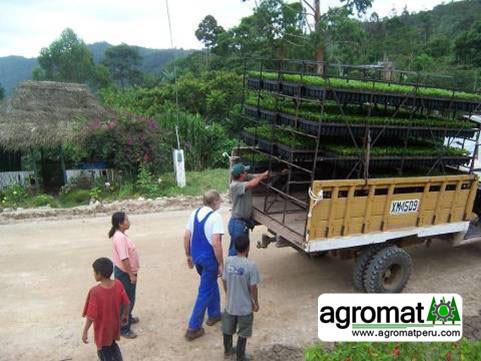 transporte de plantones4.jpg