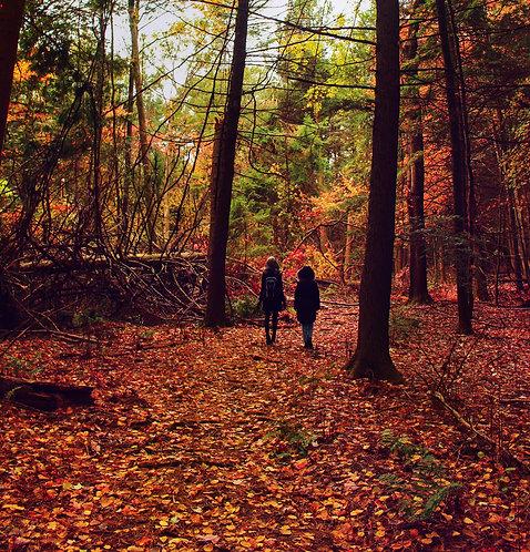 Woodland Wandering