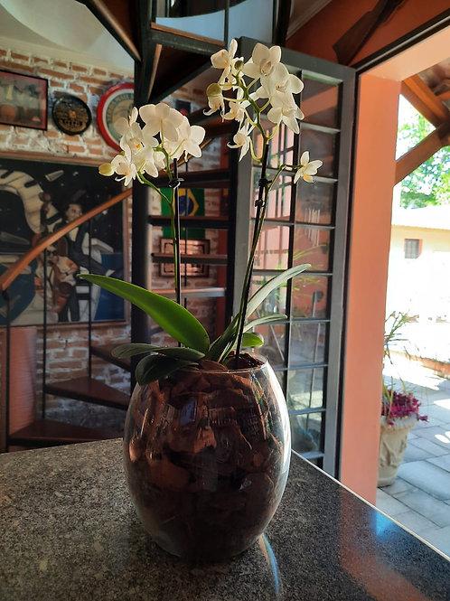 Mini Orquídea no vidro longo