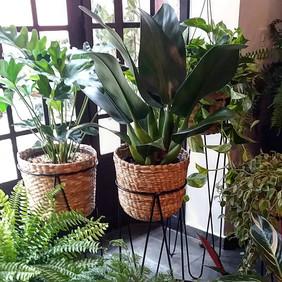 Paisagismo residencial - folhagens tropicais