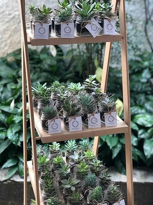Mini Suculentas - Vaso de Vidro