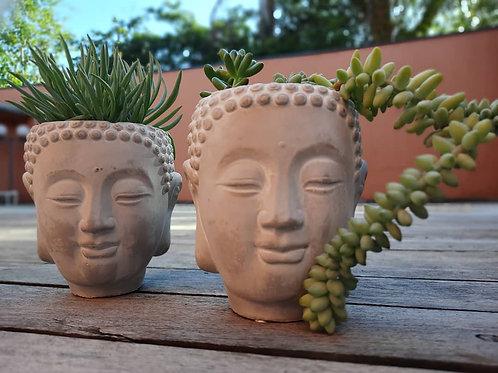 Cachepô Buda com Suculentas