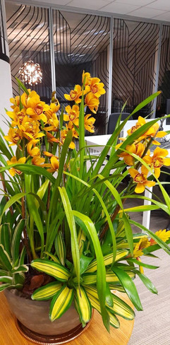 Paisagismo corporativo - bacia de orquídeas e bromélias