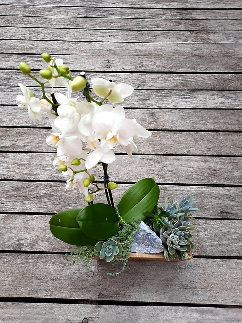 Jardineira com Orquídea e Suculentas + Cristal
