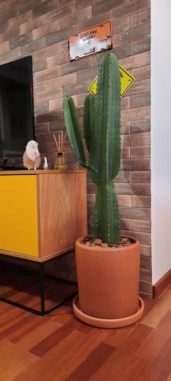Paisagismo residencial - cactus