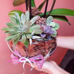 Aquário de Orquídea com Suculentas G
