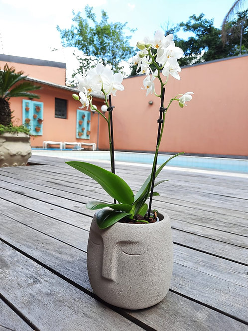 Cachepô Cabeça com Mini Orquídea