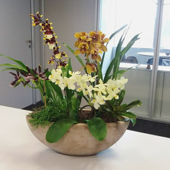 Vaso de orquídeas variadas