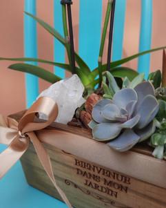 Jardineira de Orquídea, Suculentas e Cristal