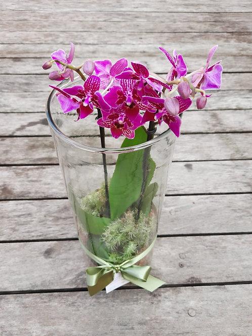 Orquídea no Cilindro - M