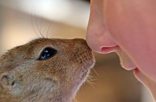 Squirrel Love.jpg