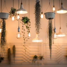 Light and Plant Arrangement.jpg