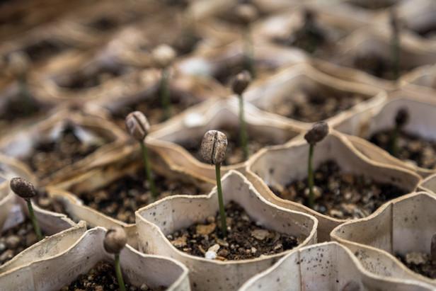 Blooming Plants.jpg
