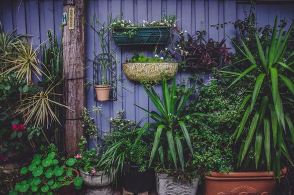 Wall of Plants.jpg