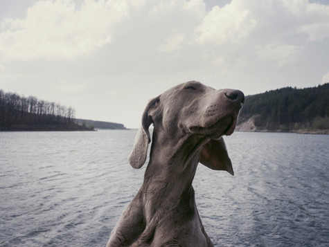 Dog by the Water.jpg