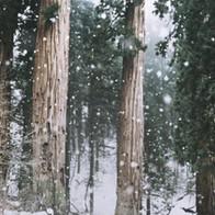 Snowfall.cms.mp4