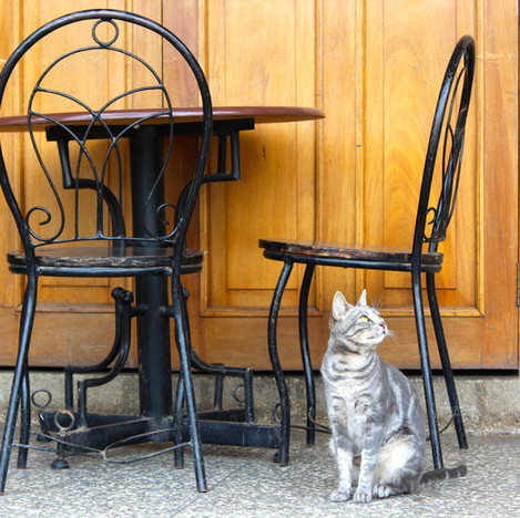 gray cat under cafe table