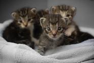 Striped Kittens.jpg
