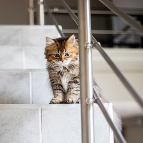 kitten on the stairs