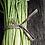 Thumbnail: Coconut Lemongrass Body Butta