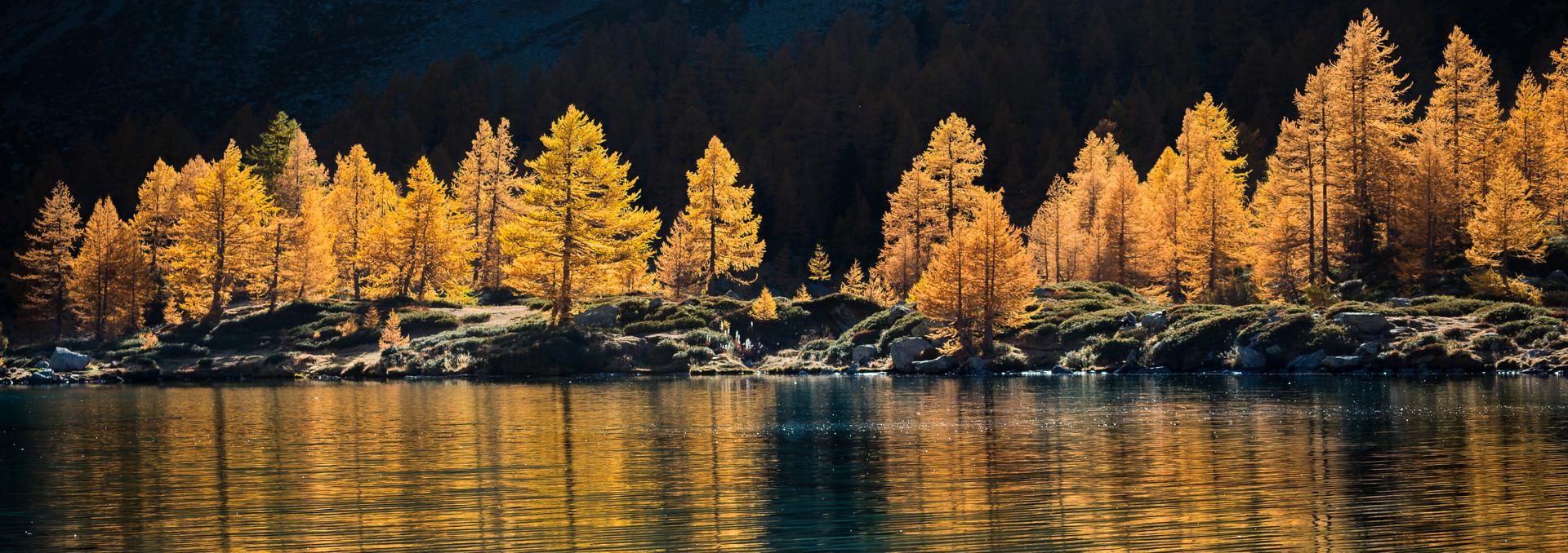 Autumn Trees | Arpy Lake