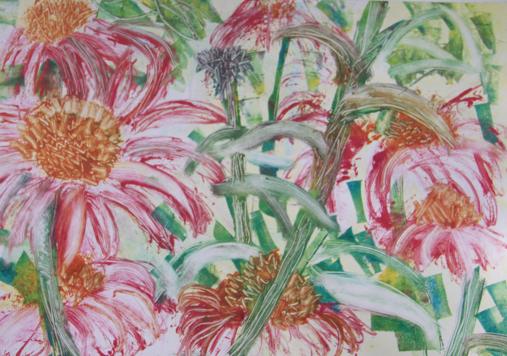 Echinacea No1