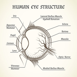 ¿Has escuchado hablar alguna vez sobre pérdida de visión debido a una degeneración Macular?