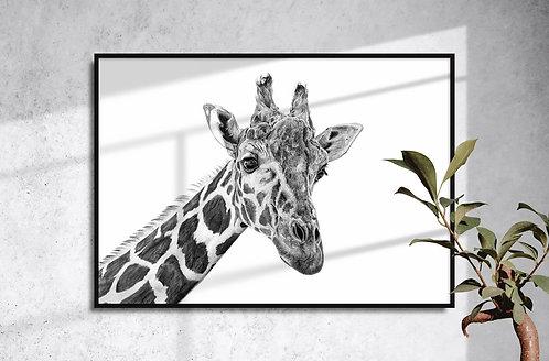 Giraffe Giclée Print by Brandon Andrews