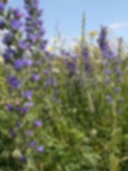 Bees 4.jpg