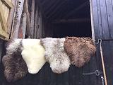 Wooly Comforts.jpeg